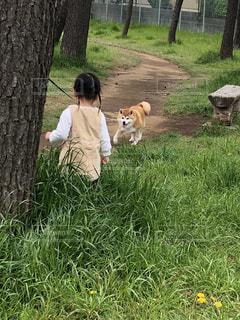 犬,公園,動物,女の子,いぬ,2歳,孫,わんちゃん,ワンチャン