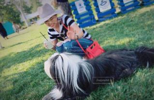 犬の写真・画像素材[2029736]