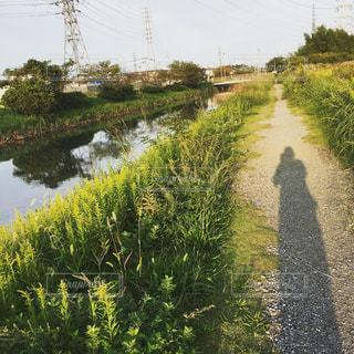 春の夕暮れの写真・画像素材[2265045]