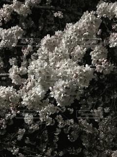 花の写真・画像素材[1961780]