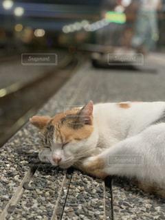 猫,動物,駅,ペット,人物,台湾,十份,ネコ
