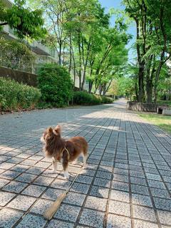 犬,動物,屋外,晴天,散歩,景色,樹木,歩道,散歩道