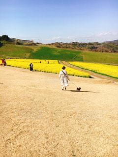 犬,風景,空,動物,屋外,晴天,散歩,菜の花,景色,草,高原