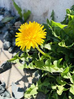 春の黄色はステキの写真・画像素材[2033604]