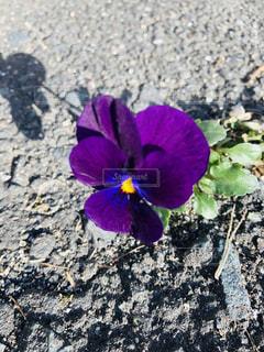 たった一輪だけの小さな花の写真・画像素材[2051914]
