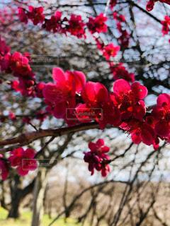 自然の花かんむりの写真・画像素材[2051922]