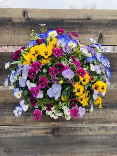 春の盛り合わせの写真・画像素材[2061301]