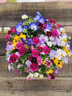 色鮮やかな春の写真・画像素材[2061321]