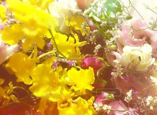 お花の写真・画像素材[1950815]