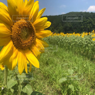 花の写真・画像素材[2040480]