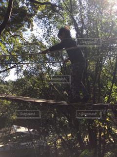 木の側面にスケートボードに乗っている男の写真・画像素材[2386924]
