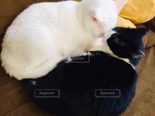 2人,猫,動物,室内,ペット,クッション,ソファー,人物,ネコ