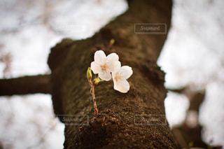 近くの花のアップの写真・画像素材[1933045]