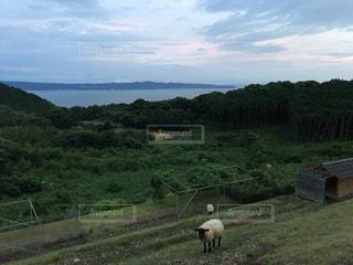 緑豊かな野原の上に立っている羊の群れの写真・画像素材[2101642]