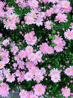 お花の写真・画像素材[1981240]