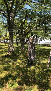 木の隣に立っている人の写真・画像素材[2089908]