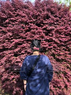 花,屋外,ピンク,植物,後ろ姿,人物,外,人,日中