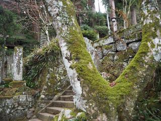 寺の階段の写真・画像素材[2147022]
