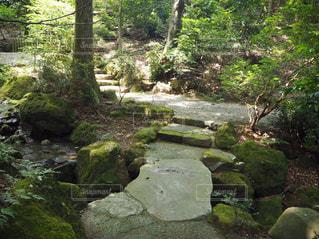 森の階段の写真・画像素材[2147066]