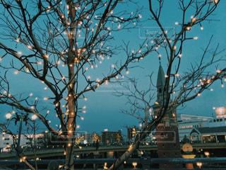 都市の大きな木の写真・画像素材[1938861]