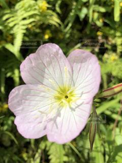 花,屋外,景色,可愛い,アップ,パステル,パステルカラー,おしゃれ,ファンシー