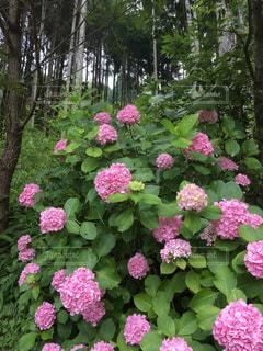 植物の上のピンクの花の写真・画像素材[2142270]