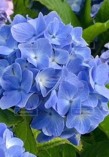 花のクローズアップの写真・画像素材[2142470]