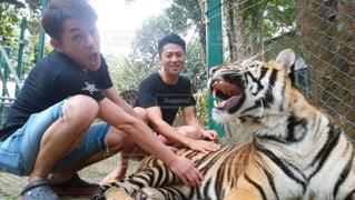 虎と一緒に記念撮影の写真・画像素材[2178328]