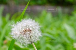 植物のクローズアップの写真・画像素材[2290090]