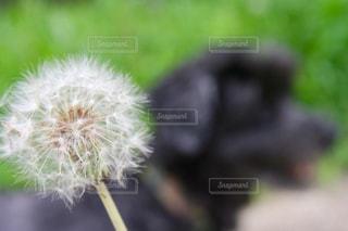 植物のクローズアップの写真・画像素材[2290094]