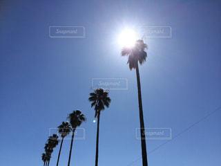 真っ青な空に降り注ぐ太陽の光の写真・画像素材[2623531]