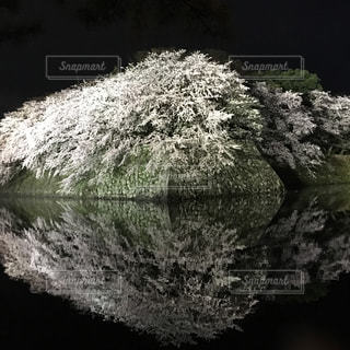 彦根城,お掘りに映る桜