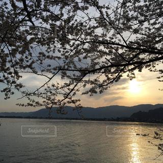 夕日,桜,海津大崎