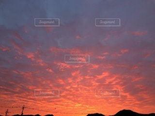 濃いオレンジの写真・画像素材[3397354]