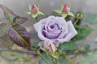 花のクローズアップの写真・画像素材[4332139]