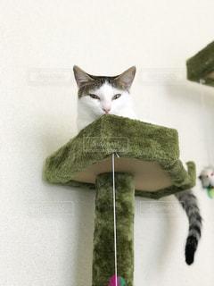 白い壁の上に座っている猫の写真・画像素材[1289743]