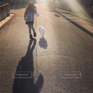 犬,夕日,屋外,散歩,影,光,いぬ,人,わんちゃん,ワンコ,犬と私