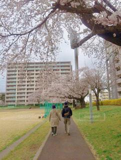 桜の下二人の写真・画像素材[1974918]