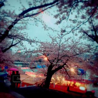 恋人,風景,春,桜,雨,地元,岡崎,岡崎公園