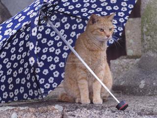 傘と猫の写真・画像素材[2180210]