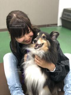 シェットランドシープドッグ,犬と私,シエルティー