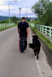 男性,犬,散歩,北海道,後姿,バーニーズマウンテンドッグ,後ろすがた