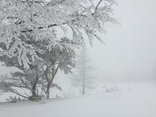 菅平スキー場の霧氷の写真・画像素材[2817272]