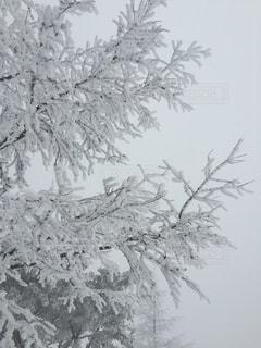 霧氷の写真・画像素材[2817280]