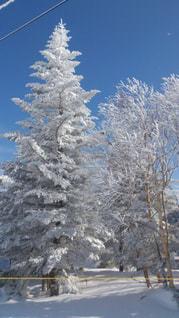 草津国際スキー場の霧氷の写真・画像素材[2817279]