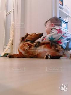 犬,赤ちゃん,じゃれる,犬と赤ちゃん,犬と