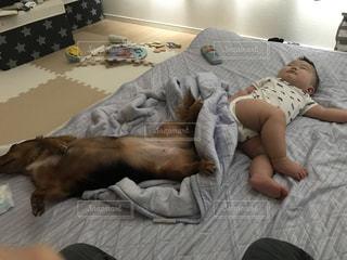犬,昼寝,仲良し,遊び疲れ,熟睡,犬と赤ちゃん