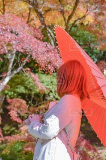 秋,紅葉,傘,赤,番傘
