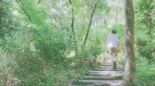 森の木の写真・画像素材[2212412]