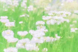 花のクローズアップの写真・画像素材[2281540]